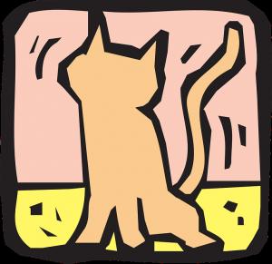 cat-45767_960_720